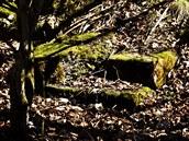 Vojensk� �jezd Brdy - zbytky dom� zanikl� obce Kolv�n
