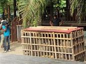 Afangui byla první zabavenou gorilou v Rovníkové Guineji v srpnu 2012. V této...