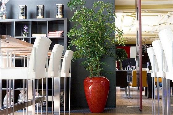 Pokojová květina ozdraví váš interiér i duši
