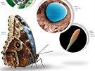 Motýli v detailu
