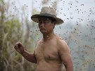 Še Pching si na tělo umístil několik včelích matek, jejicž feromony přilákaly...