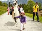 Vycházky v doprovodu lam patří na Braunwaldu mezi nejoblíbenější dětské