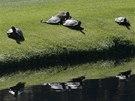 PLÍŽIVÍ DIVÁCI. Masters v Augustě sledují i želvy.