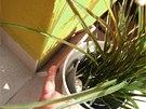 Na venkovní terase odpadává sokl kvůli vlhkosti v konstrukci.