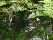 Tropický motýl (zhruba uprostřed fotografie) který usedl na vodní hladinu,...
