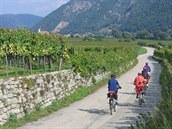 Na Dunajské cyklostezce mezi vinicemi u Weissenkirchenu.