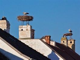 Městečko Rust u Neziderského jezera je proslulé čapími hnízdy.
