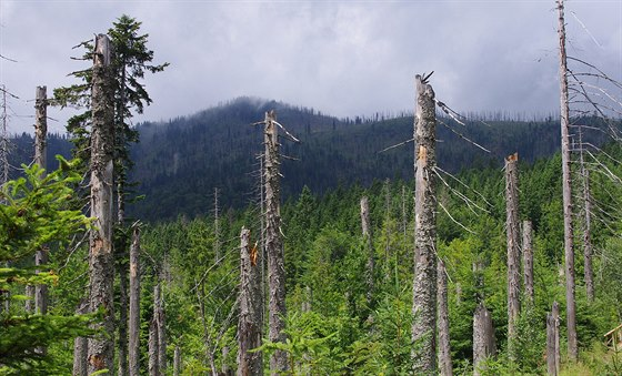 Tajuplné lesy pod Roklanem