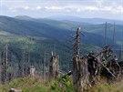 Národní park Bavorský les z Roklanu