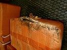 SZPI odhalila zásilku plesnivého zelí z Číny. Plíseň byla viditelná už na...