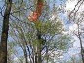 Polský paraglidista skončil na vrcholu dvacet metrů vysokého stromu. (1.5.2014)