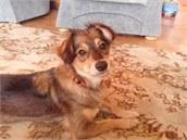Můj pes Nela a trable zažité s ní
