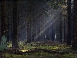 V lese Bor se údajně stávají paranormální jevy