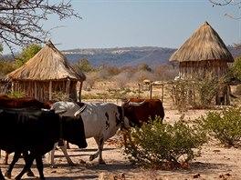 Africké zátiší – hliněné chatrče se slaměnou střechou, dobytek na pastvě a...