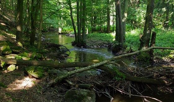 Řeka Jevišovka u Jevišovic
