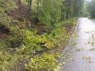 Těsně před vozidlo na silnici Odry - Spálov v Moravskoslezském kraji spadl