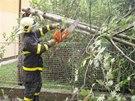 Hasiči v Ostravě-Porubě likvidovali před polednem zlomený strom zasahující do