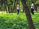 Studentky chystají na ďáblickém hřbitově v Praze Les vzpomínek, kde se bude...