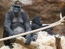 Bikira s Kiburim během klidnější chvilky odpočinku na parkosech