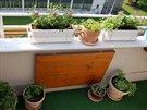 balkon, květináče, sadba