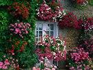 závěsné truhlíky, květiny
