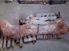 Kosti dinosaura byly vystaveny v muzeu v argentinském městě Trelew (18. 5.