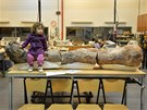 Kosti dinosaura byly vystaveny v muzeu v argentinsk�m m�st� Trelew (18. 5.