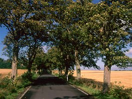 Ostrov Rujánu křižuje mnoho vedlejších silnic lemovaných alejemi.