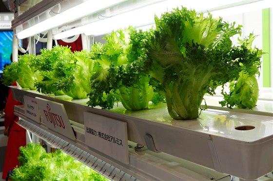 Moderní pěstování i v kancelářských budovách.