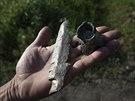 Muž ukazuje úlomky projektilu, které našel ve svém domě, když ukrajinské síly...