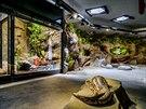 """Velemloky představí pražská zoo ve dvou světelných režimech - """"den"""" a """"noc""""...."""