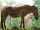 Klisni�ka (221. h��b� narozen� v Zoo Praha) s matkou Harou.