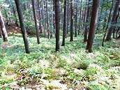 Pohled z naučné stezky do jedlo-bukového lesa pralesu Mionší.