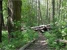 Seběh lesem