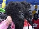 Běh pro gorily - před startem se běžci fotografovali v maskách. (28. května...