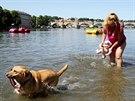 Úmorné vedro hůře zvládají i zvířata. (9. června 2014)