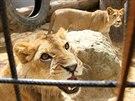 Spoustu práce bude mít majitel zookoutku jen s tím, aby zvířata dokázal...