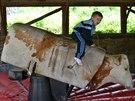 Jízdu na elektrickém býkovi zkoušely nejen děti.