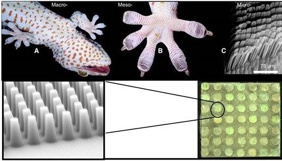 Speciální přísavky fungují na stejném principu, jako prsty gekonů.