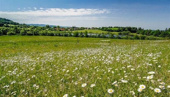 Pohled na Býkovice a Býkovický rybník