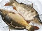 Rybářské slavnosti v Blatné