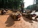 Kurz p�e�it� cizineck� legie ve Francouzsk� Guyan�