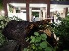 Vyvrácené stromy před vchodem nemocnice v německém Dortmundu. (10. června 2014)