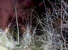 Tíživé místo u Hostivařské přehrady, kde byl nalezen cizinec, který nebyl