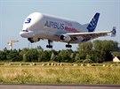 Přistávající nákladní letadlo Beluga firmy Airbus