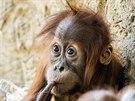 Malá Diri a její zamyšlený pohled