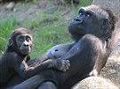 Kiburi s matkou Kijivu ve venkovním výběhu