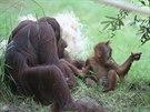 Gempa se svojí malou sestrou Diri, zvědavě zkoumající své okolí