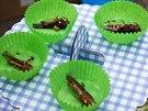 Servírují se i kobylky v trojbalu (Ilustrační foto z loňského ročníku festivalu...