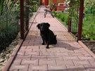 Uprostřed zahrady je chodník ze zámkové dlažby položený na betonu, aby